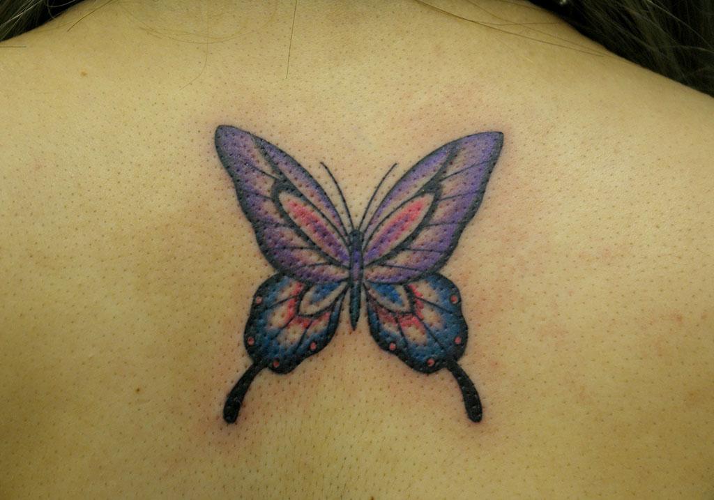 紫系の色の蝶