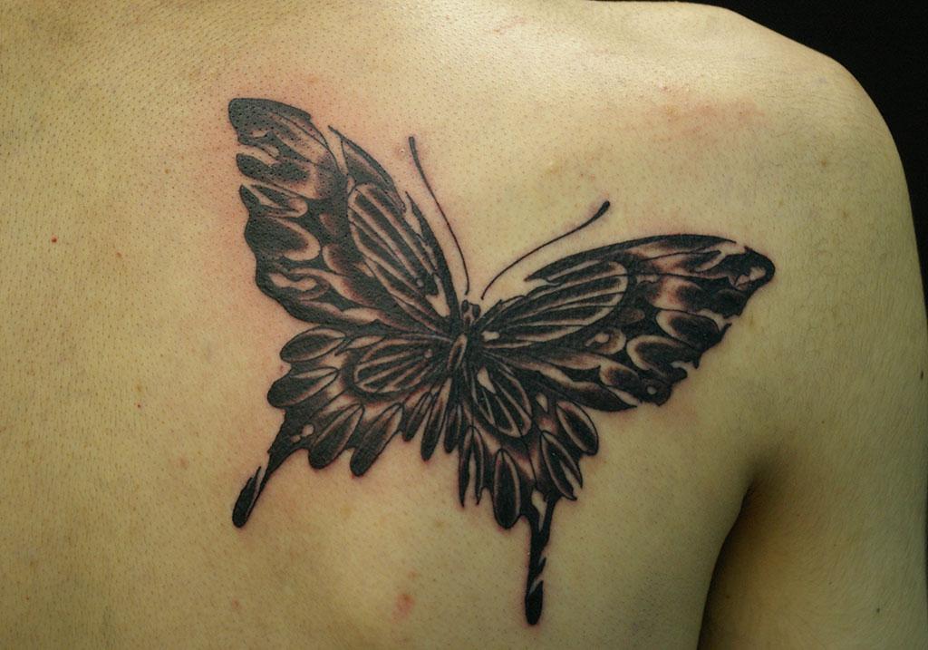 羽の破れた蝶
