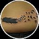 ハ羽と鳥のカバーアップ