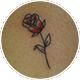 小さな薔薇