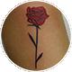 小さな赤い薔薇