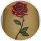 ふくらはぎの薔薇